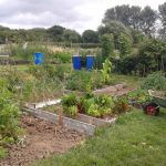 Blakeney Road Allotments